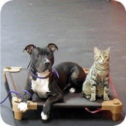 "Pet Cot Dog Bed - Brown - 39x22"""