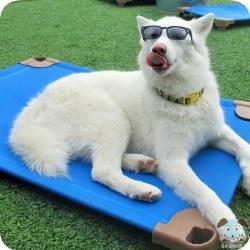 """Pet Cot Dog Bed - Sky Blue - 22x22"""""""