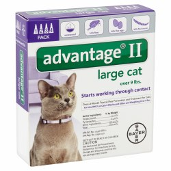 Advantage II - 9-18 lb Cat - 4 months