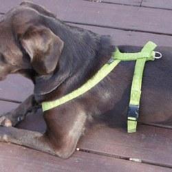 "Good Dog - Hemp Corduroy Harness - Avocado - 1"" Medium"