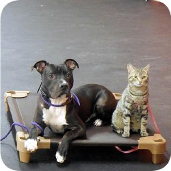 "Pet Cot Dog Bed - Brown - 22x22"""