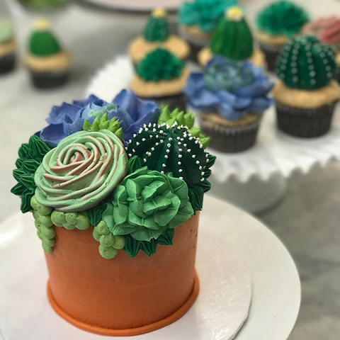 Supply Kit Succulent Cake