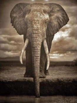 Elephant By The Watering Hole