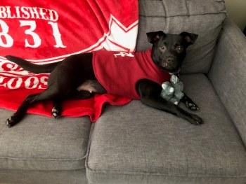 Dog Fleece Lrg Red