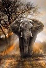 Illustrious Elephant
