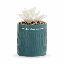 Succulent Oil Diffuser A Mother's Love
