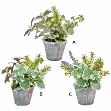 """Potted Herb 9.75"""" Lambs Ear (A)"""
