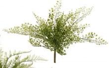 Fern Bush Small (c)