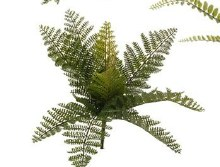 Fern Bush Small (d)