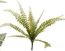 Fern Bush Small (a)