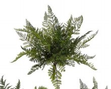 Fern Bush Large (b)