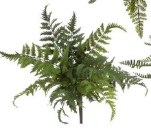 Fern Bush Large (c)