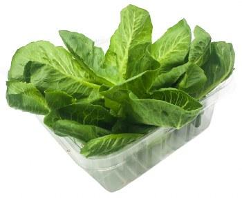 Romaine Lettuce 4.5oz