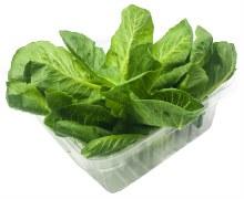 Romaine Lettuce 4.5
