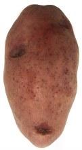 Red Potato