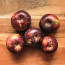Black Oxford Apple