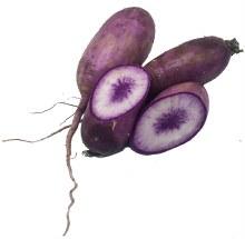Purple Daikon