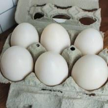 Duck Eggs 1/2 Dozen