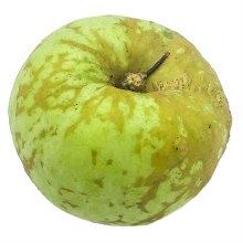 Knobbed Russett Apple