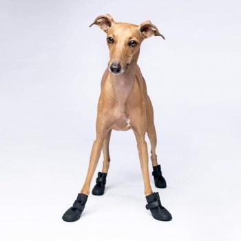 Cp Wellies Dog Boots 2xl