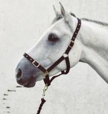 Equisential Economy Headcollar & Leadrope Set (Navy) Pony