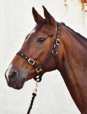 Equisential Economy Headcollar & Leadrope Set (Black) Pony