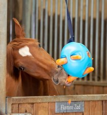 Shires Carrot Ball (Blue)