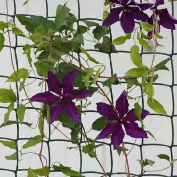 Climbing Plant & Fencing Mesh 50mm, 1 x 5m Green