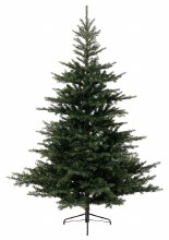 Grandis Christmas Tree 7ft