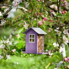 Beach Hut Purple - Birds seed feeder