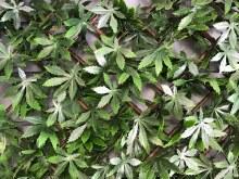 Evergreen Artificial Hedge Trellis 2x1m