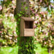 Classic Robin Wooden Nest Box