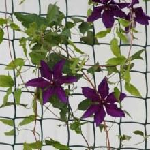 Climbing Plant & Fencing Mesh 50mm, 0.5 x 5m Brown