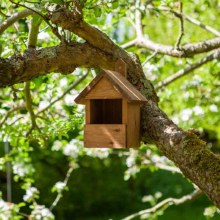 Premier Robin Wooden Nest Box