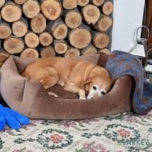 Velour Latte Square Dog Bed Extra Large