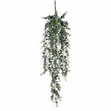 EucalyptusHanging plant