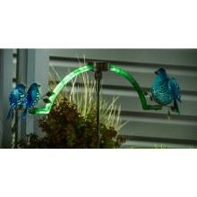Blue Bird Balancing Stake