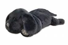 Labrador Puppy Black