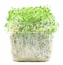 Alfalfa Sprouts -- Package