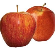 Apples Gala -- Per Lb