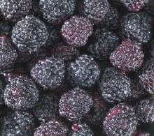Blackberries -- Package 8 oz