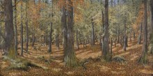 Lynne Schumacher, Forest of the Headwaters
