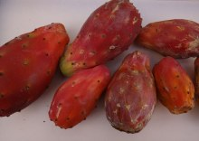 Tuna Red Cactus