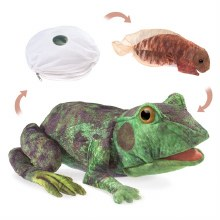Folkmanis Frog Life Cycle