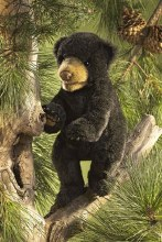 Folkmanis Black Bear Cub Puppet