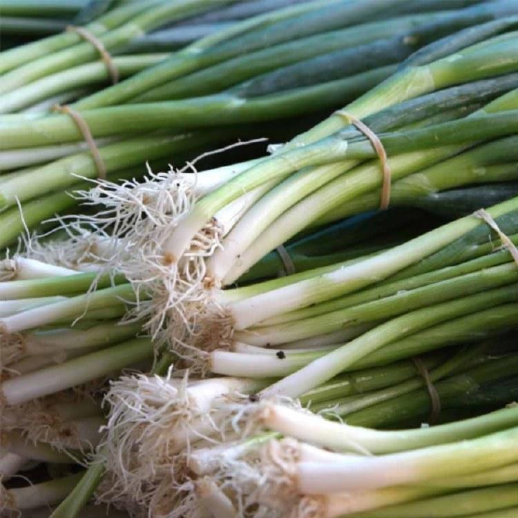 Eschallots (Spring Onions) Bunch