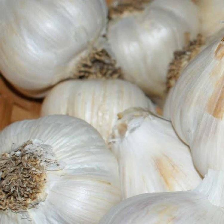Spice Garlic Russian (Australian Grown) 100gm