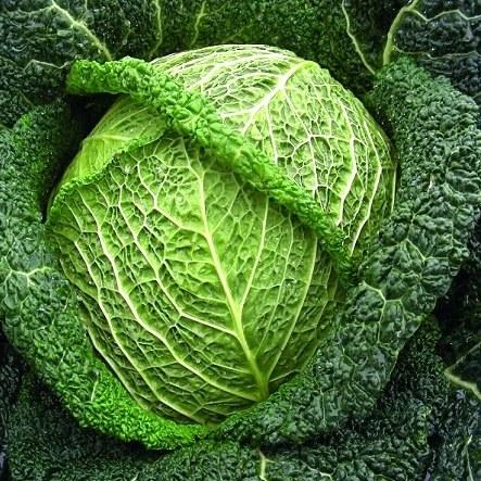 Cabbage Savoy Whole