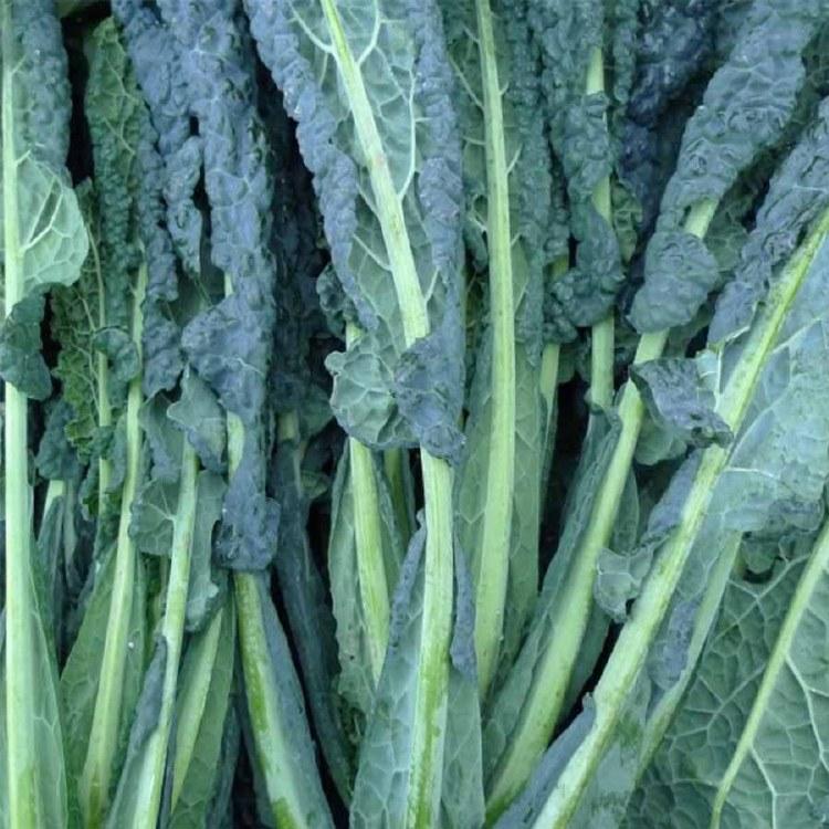 Kale Cavolo Nero Bunch