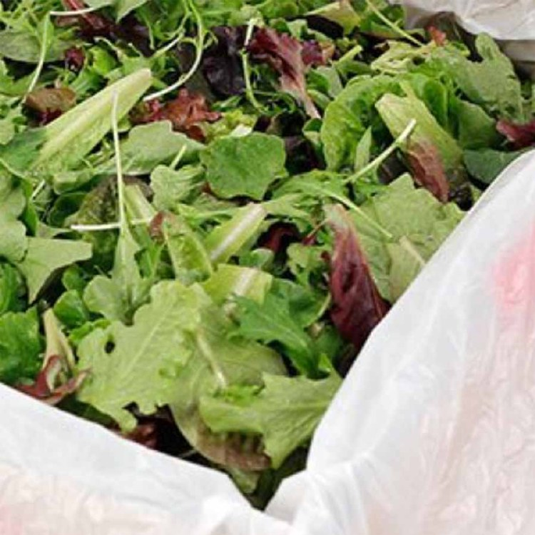 Lettuce Salad Mix Bulk 1.5kg